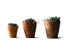 Three cactus pots